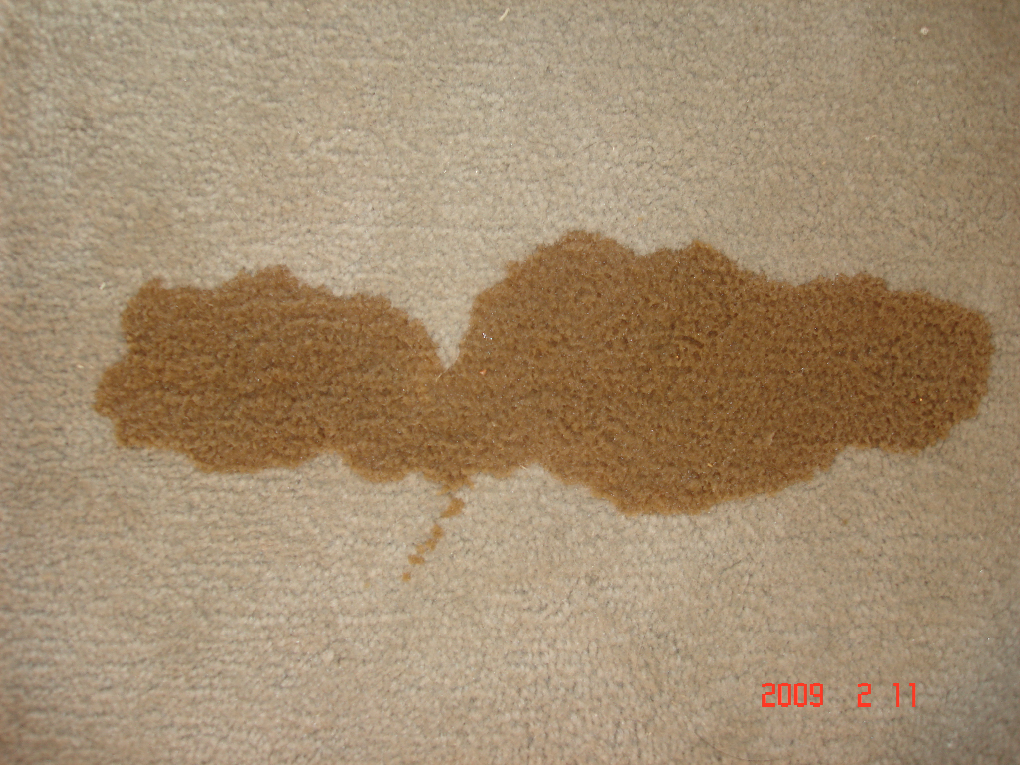Coffee stain removal in your home or office in boulder and broomfield county carpet and - Remove carpet stains ...